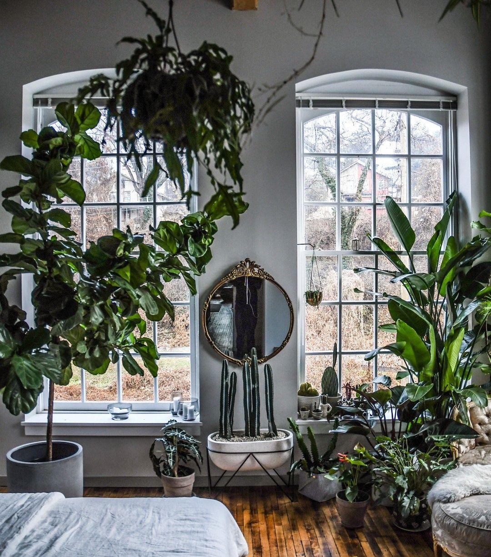 Arredamento boho piante